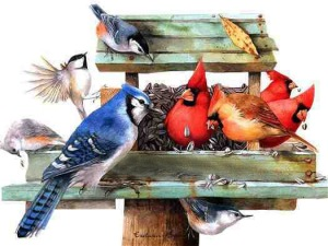 Hungry Birds at Bird Feeder